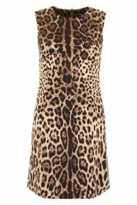 Dolce & Gabbana Leopard-printed Dress
