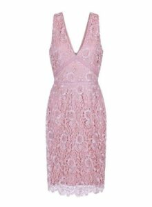 Womens **Paper Dolls Blush Lace Bodycon Dress- Pink, Pink
